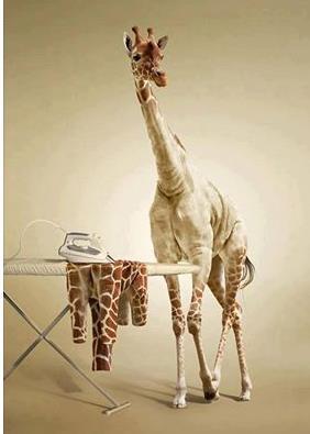 GiraffeSuit