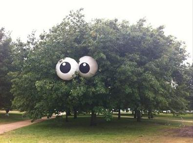 TreeEyes