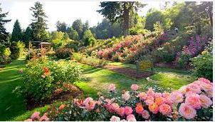 Garden(new)