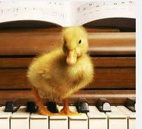 DuckPiano