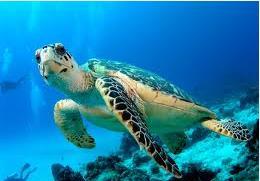 Turtle(newest)