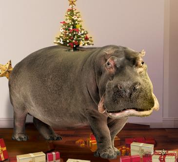 I Want A Hippopotamus For Christmas Lyrics.I Want A Hippopotamus For Christmas Pogue Mahone Blog