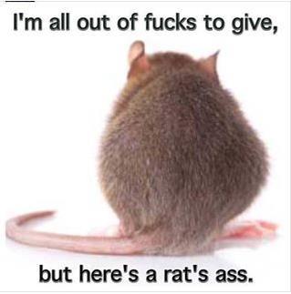 RatsAss(new)