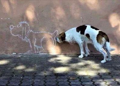 DogButt
