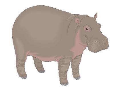 HippoD
