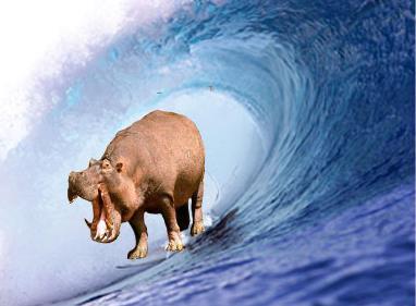 HippoSurf