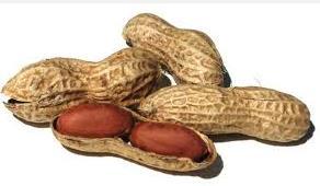 Peanuts(new)