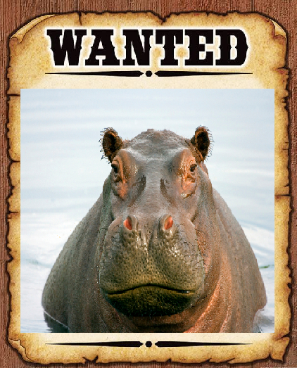 Hippo wanted