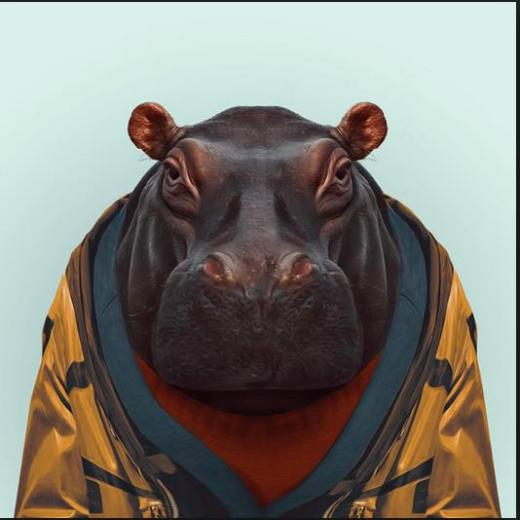 HippoRobe