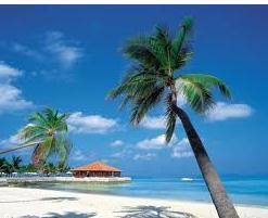 Caribbean(new)