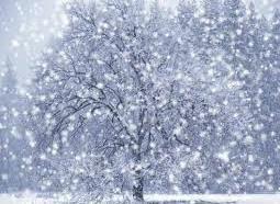 Snow(new)