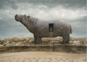 HippoDoor