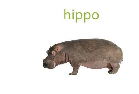 HippoSign